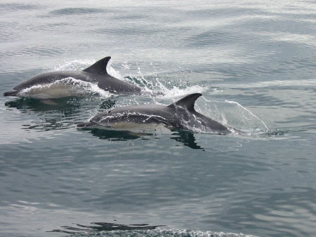 Dolphin Stories