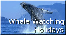 Whale Watching Holidays