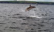 dolphin watch ireland